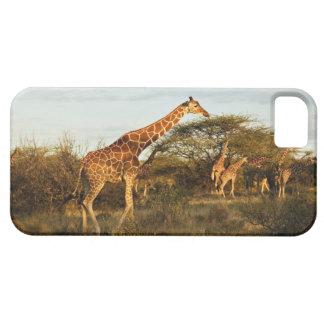 Jirafas reticuladas, camelopardalis 2 de la jirafa iPhone 5 funda