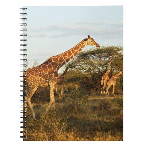 Jirafas reticuladas, camelopardalis 2 de la jirafa libro de apuntes con espiral