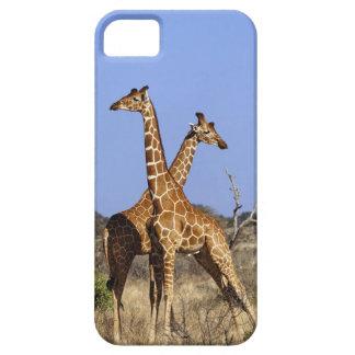 Jirafas reticuladas, camelopardalis 3 de la jirafa iPhone 5 Case-Mate carcasas