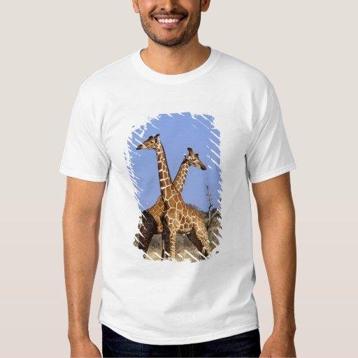 Jirafas reticuladas, camelopardalis 3 de la jirafa remeras