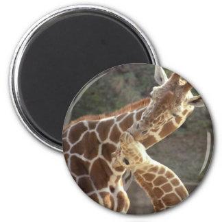 jirafas reticuladas imán redondo 5 cm