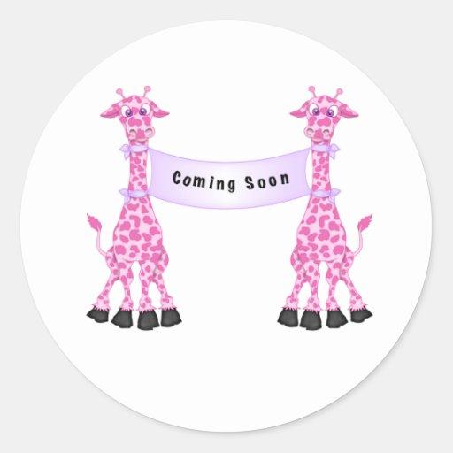 Jirafas rosadas que vienen pronto pegatina redonda