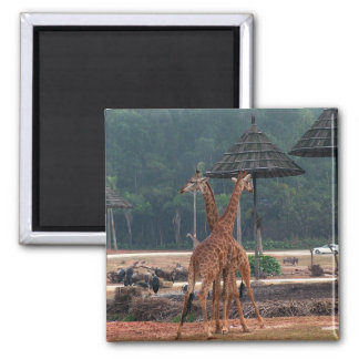 Jirafas y árboles, 长颈鹿. Fotografía del parque Imán De Nevera