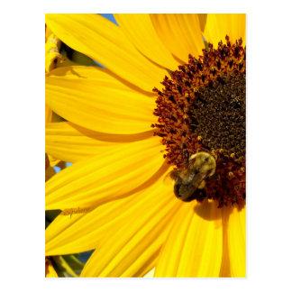 """jjhelene """"Teddy Bear Queen Bee"""" Designs Postcard"""