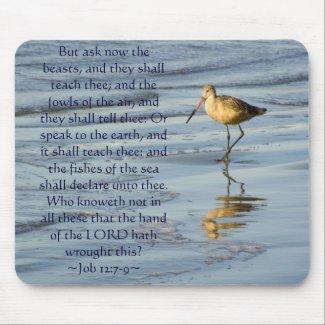 Job 12:7-9 Sandpiper