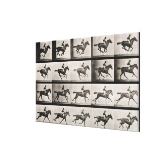 Jockey on a galloping horse, plate 627 from 'Anima Canvas Prints