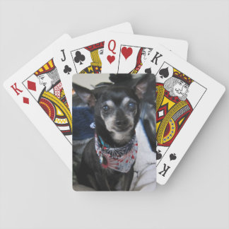 Joey  the chihuahua Playing Cards