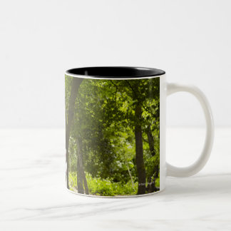 Jogger stretching in forest Two-Tone coffee mug