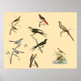 Johann Lebrecht Reinold's bird paintings poster