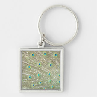 Johannesburg Zoo, Gauteng Province, South Africa Silver-Colored Square Keychain