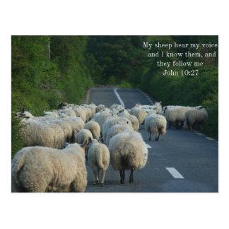 John 10:27 Christian Postcard