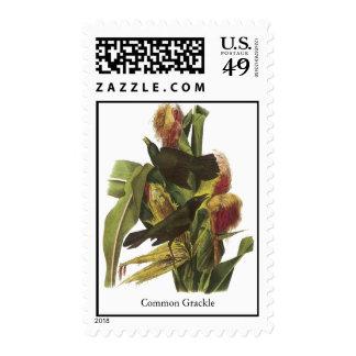 John Audubon Common Grackle Print Stamps
