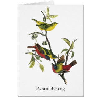 John Audubon Painted Bunting Print Greeting Card