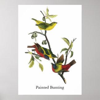 John Audubon Painted Bunting Print