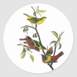 John Audubon Painted Bunting Print Round Stickers
