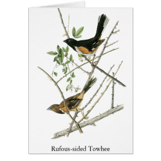 John Audubon Rufous-sided Towhee Card