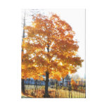 John Brown Farm Historic Adirondack Autumn Grave Stretched Canvas Print