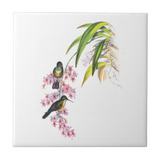 John Gould s Pink Orchids and Hummingbirds Tile