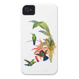 John Gould's Hummingbirds with  Pink Orchids iPhone 4 Case