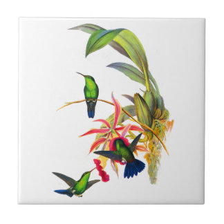 John Gould's Hummingbirds with  Pink Orchids Tile