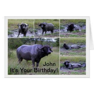 John Happy Birthday Cape Buffalo Mud Bath Card