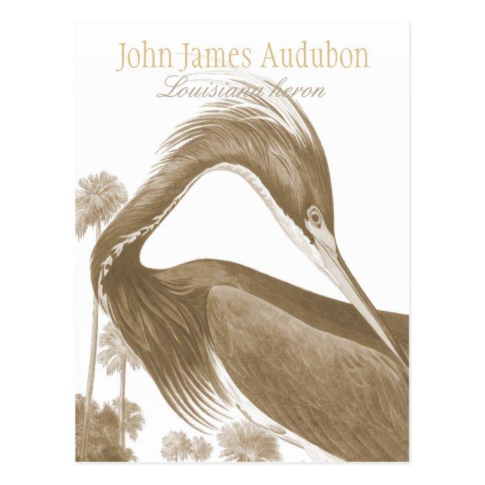 John James Audubon Lousiana heron CC0752 Bird