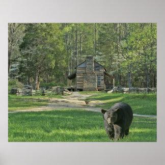 John Oliver Black Bear Cabin Poster