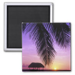 John Pennekamp State Park, Florida Keys, Key 2 Inch Square Magnet
