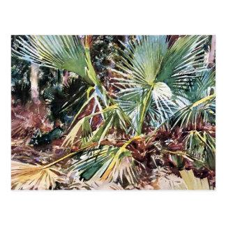 John Singer Sargent: Palmettos, Florida Postcard
