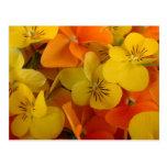 Johnny anaranjado y amarillo salta encima de la postales