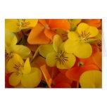 Johnny anaranjado y amarillo salta encima de tarjeta