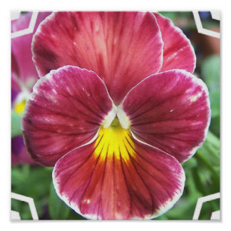 Johnny Jump Up Flowers Poster Print