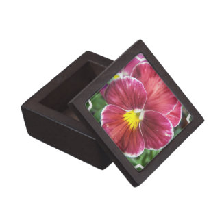 Johnny Jump Up Flowers Premium Gift Box