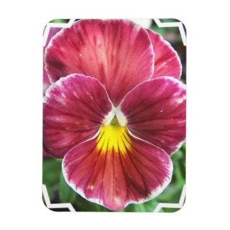 Johnny Jump Up Flowers Premium Magnet Magnets