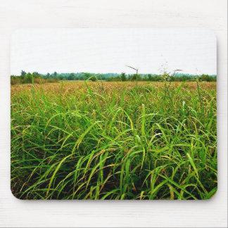 Johnson grass covering floodplain mouse pads