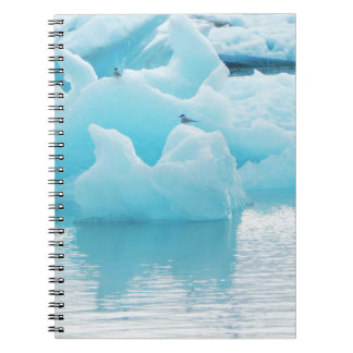 Jökulsárlón terns notebook