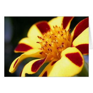 Jolly Jester Marigold - blank notelet / card