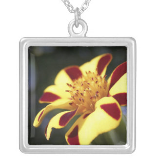 Jolly Jester Marigold Necklace