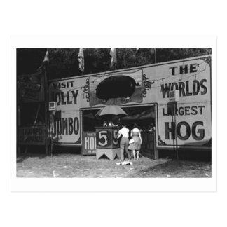 Jolly World's Largest Hog Vintage Carnival Photo Postcard