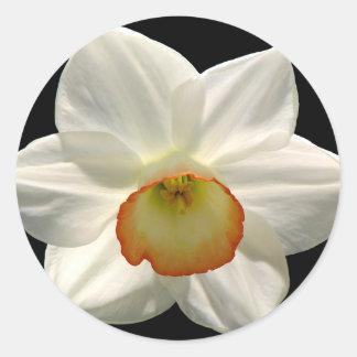 Jonquil/Daffodil Classic Round Sticker
