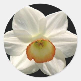 Jonquil/Daffodil Stickers