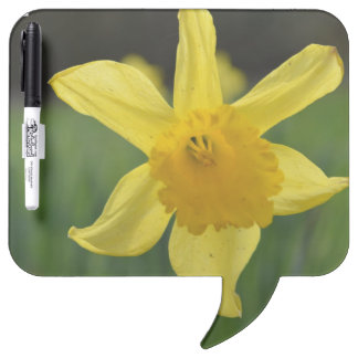 Jonquil Dry-Erase Board