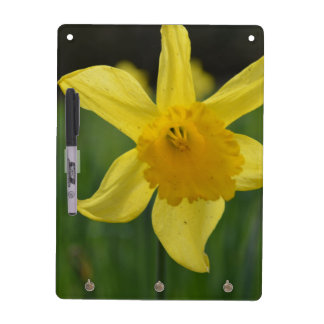 Jonquil Dry Erase Board