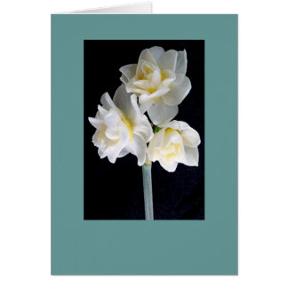 Jonquil Flower - Ecclesiastes 3:1 Cards