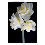 Jonquil Flower - Ecclesiastes 3:1 Greeting Card