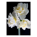 Jonquil Flower - Ecclesiastes 3:1 Greeting Cards