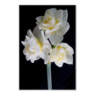 Jonquil Flower - Ecclesiastes 3:1 Posters