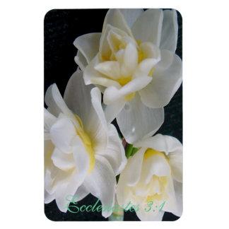 Jonquil Flower - Ecclesiastes 3:1 Rectangular Magnets
