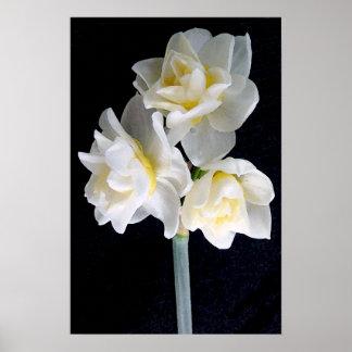 Jonquil Flower - Ecclesiastes 3:1 Print
