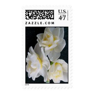 Jonquil Flower - Ecclesiastes 3:1 Stamp